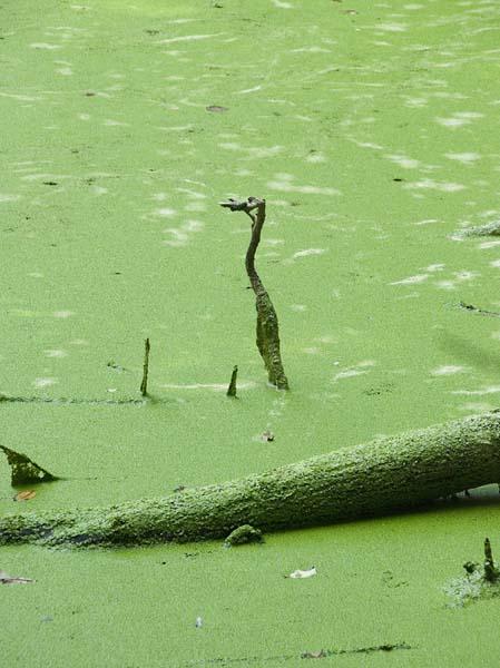 Teich im Maxemer Wissewäldsche